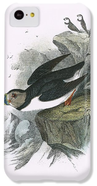 Puffin IPhone 5c Case by English School