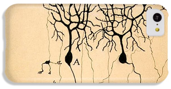 Pigeon iPhone 5c Case - Purkinje Cells By Cajal 1899 by Science Source