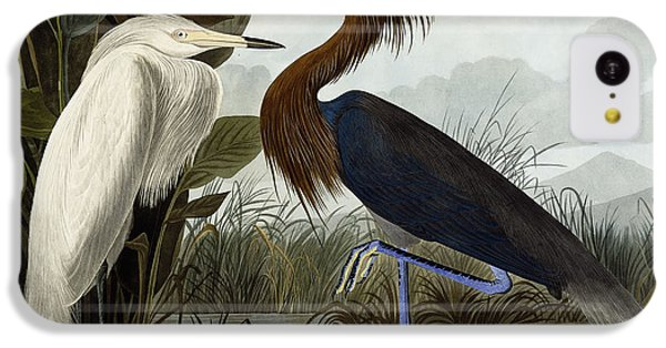 Purple Heron IPhone 5c Case by John James Audubon