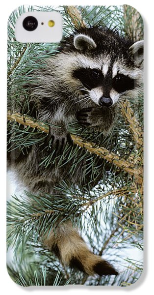 Raccoon IPhone 5c Case