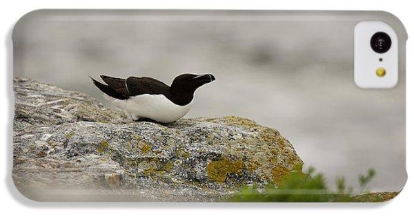 Razorbill iPhone 5c Case - Razorbill Alca Torda, A Big Diving Bird by Jose Azel
