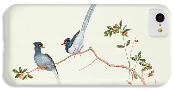 Magpies iPhone 5c Case - Red Billed Blue Magpies On A Branch With Red Berries by Chinese School