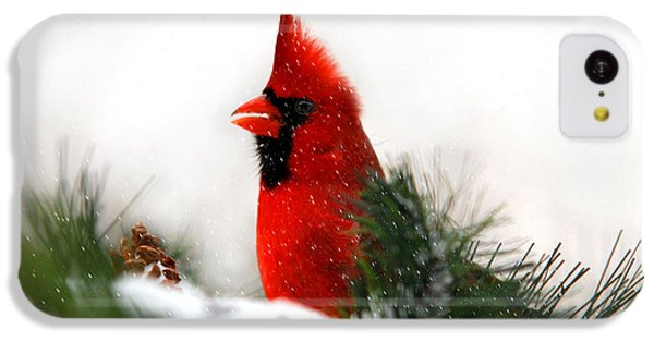 Red Cardinal IPhone 5c Case by Christina Rollo