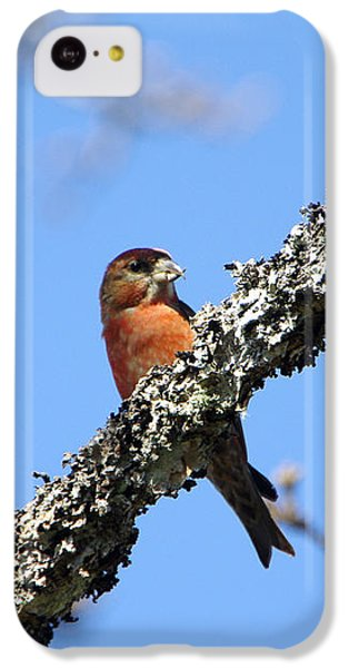 Red Crossbill Finch IPhone 5c Case