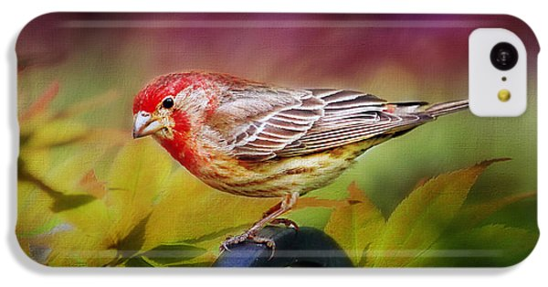 Red Finch IPhone 5c Case