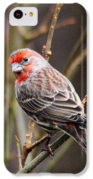 Finch iPhone 5c Case - Red Finch In Tree 4 by Rebecca Cozart
