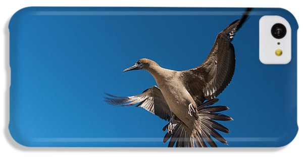 Red-footed Booby (sula Sula Websteri IPhone 5c Case by Pete Oxford