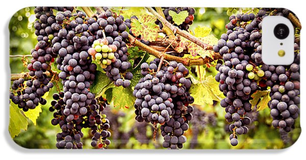 Red Grapes In Vineyard IPhone 5c Case