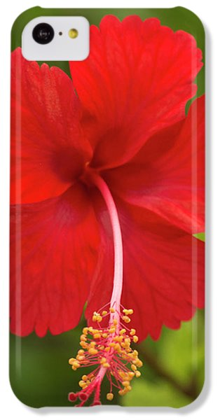 Belize iPhone 5c Case - Red Hibiscus, Hibiscus Rosa-sinensis by William Sutton