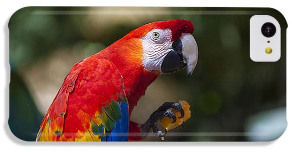 Red Parrot  IPhone 5c Case by Garry Gay