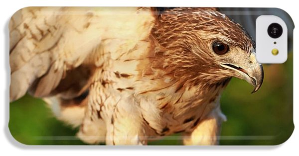 Red Tailed Hawk Hunting IPhone 5c Case by Dan Sproul