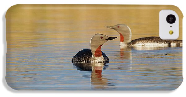 Loon iPhone 5c Case - Red-throated Loon Pair by Ken Archer