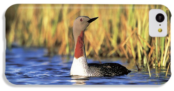 Red-throated Loon IPhone 5c Case