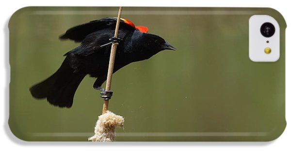Red Winged Blackbird 3 IPhone 5c Case by Ernie Echols