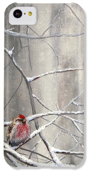 Redpoll Eyeing The Feeder - 1 IPhone 5c Case