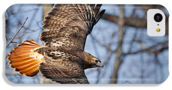Redtail Hawk IPhone 5c Case by Bill Wakeley