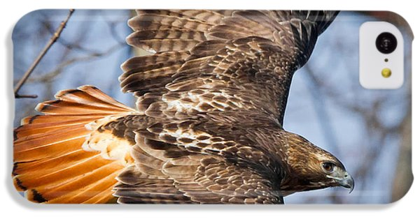 Redtail Hawk Square IPhone 5c Case by Bill Wakeley