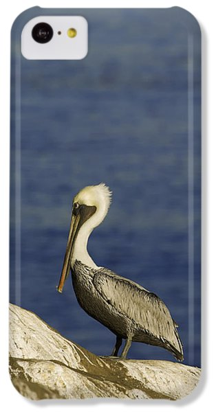 Resting Pelican IPhone 5c Case