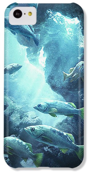 Rockfish Sanctuary IPhone 5c Case by Javier Lazo