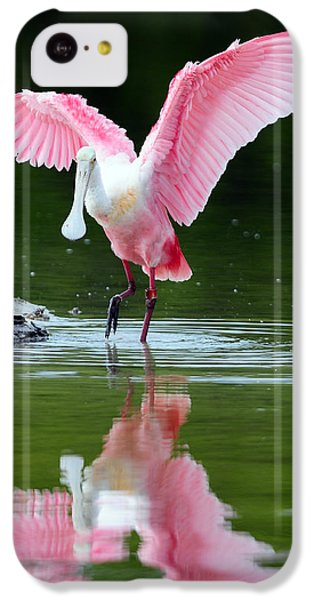 Roseate Spoonbill IPhone 5c Case by Clint Buhler