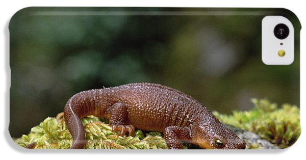 Newts iPhone 5c Case - Rough-skinned Newt Oregon by Gerry Ellis