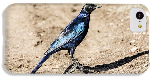 Starlings iPhone 5c Case - Ruppell's Glossy-starling by Photostock-israel