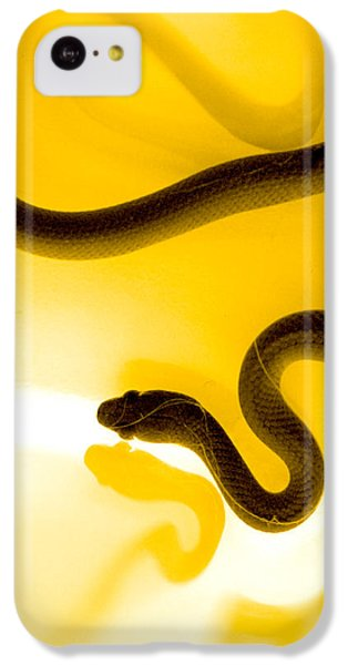 Brown Snake iPhone 5c Case - S by Holly Kempe