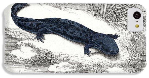 Salamanders iPhone 5c Case - Salamander by Collection Abecasis