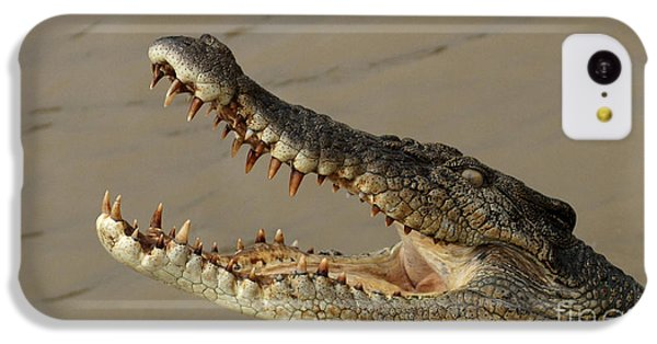 Salt Water Crocodile 1 IPhone 5c Case by Bob Christopher