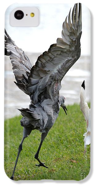 Sandhill Chasing Ibis IPhone 5c Case by Carol Groenen