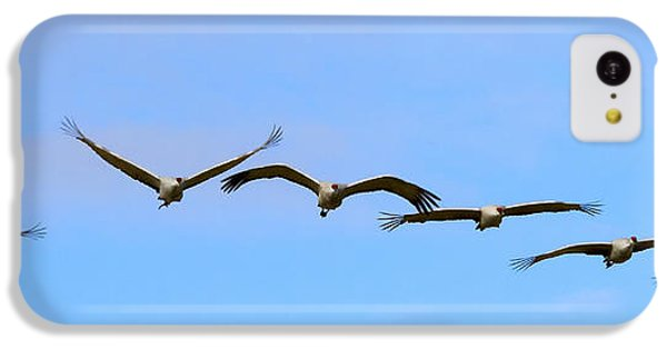 Sandhill Crane Flight Pattern IPhone 5c Case by Mike Dawson