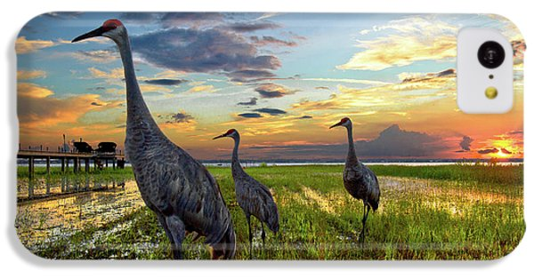 Sandhill Sunset IPhone 5c Case