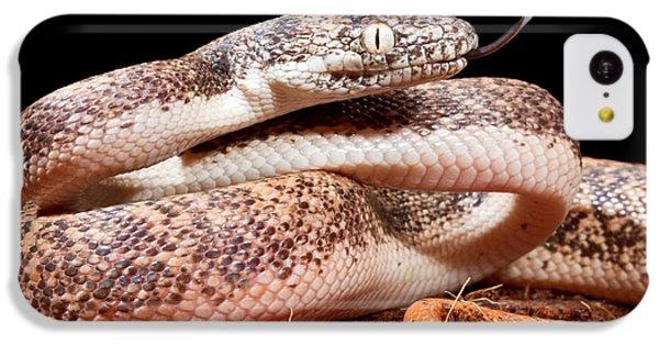 Python iPhone 5c Case - Savu Python In Defensive Posture by David Kenny