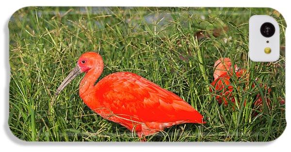 Scarlet Ibis (eudocimus Ruber IPhone 5c Case