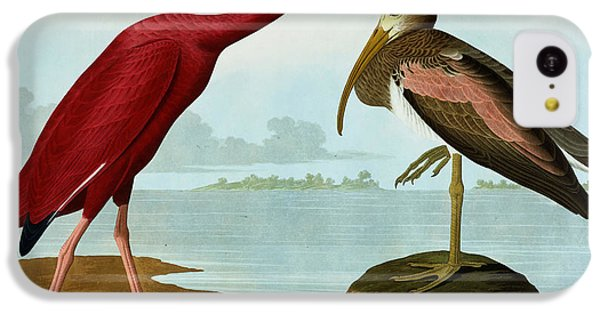 Scarlet Ibis IPhone 5c Case