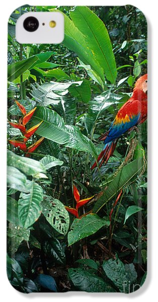 Scarlet Macaw IPhone 5c Case by Art Wolfe