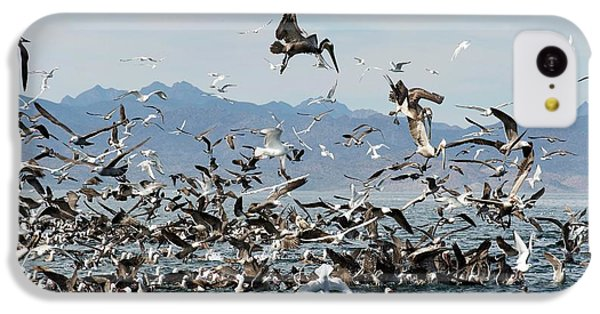 Seabirds Feeding IPhone 5c Case by Christopher Swann
