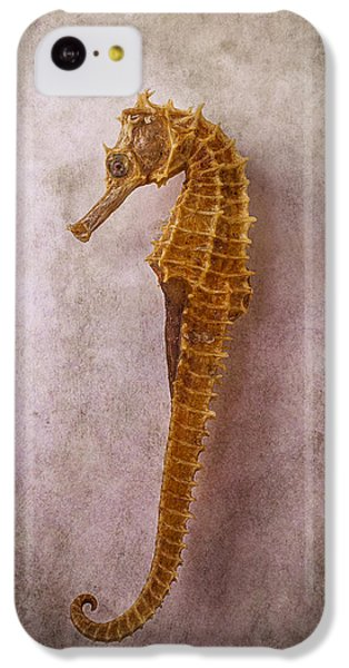 Seahorse Still Life IPhone 5c Case by Garry Gay