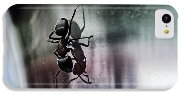 Ant iPhone 5c Case - Shadow Dancing by Susan Capuano