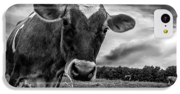 Cow iPhone 5c Case - She Wears Her Heart For All To See by Bob Orsillo