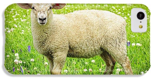 Sheep In Summer Meadow IPhone 5c Case by Elena Elisseeva