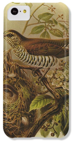Cuckoo iPhone 5c Case - Shining Cuckoo by Dreyer Wildlife Print Collections