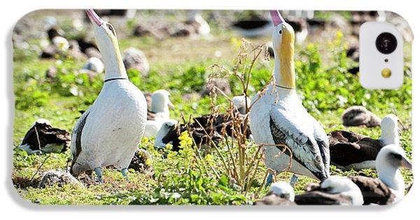 Short-tailed Albatross (phoebastria IPhone 5c Case by Daisy Gilardini