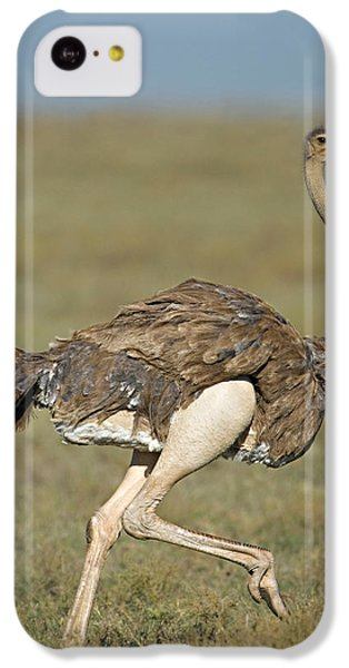 Ostrich iPhone 5c Case - Side Profile Of An Ostrich Running by Panoramic Images