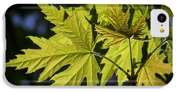 Silver Maple IPhone 5c Case