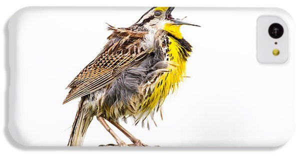 Singing Meadowlark 3rd Of 3 IPhone 5c Case