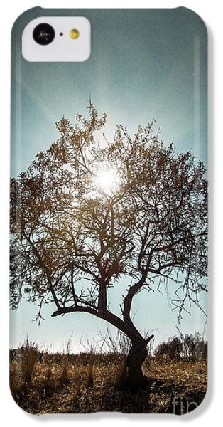 Beautiful Sunrise iPhone 5c Case - Single Tree by Carlos Caetano