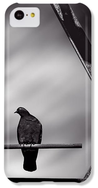 Pigeon iPhone 5c Case - Sitting On A Stick by Bob Orsillo