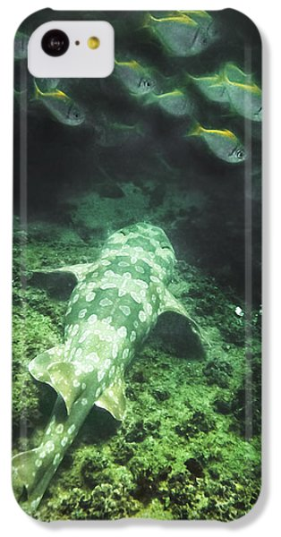 IPhone 5c Case featuring the photograph Sleeping Wobbegong And School Of Fish by Miroslava Jurcik