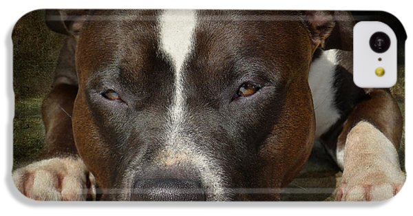 Bull iPhone 5c Case - Sleepy Pit Bull by Larry Marshall